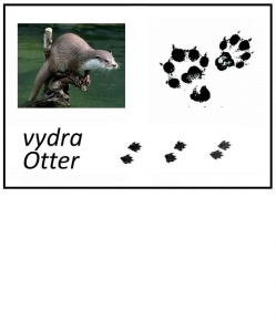 vydra.png